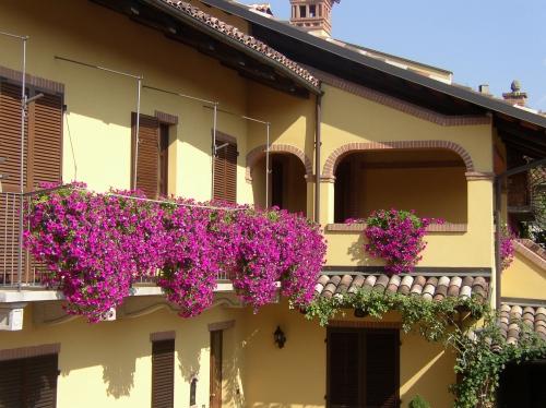 Concorso balconi fioriti for Piante secche ornamentali